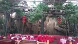 舞台搭建仿真榕树景观